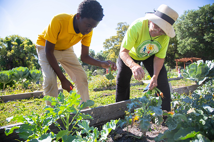 Haiking Thorton, left, harvests broccoli from the student's garden plot to take home as Kitty Wallace, the garden coordinator, assists him.