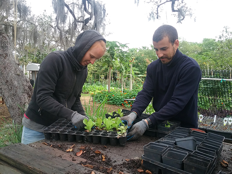 Salome Baczynsky and Florian Tapin prepare seedlings.