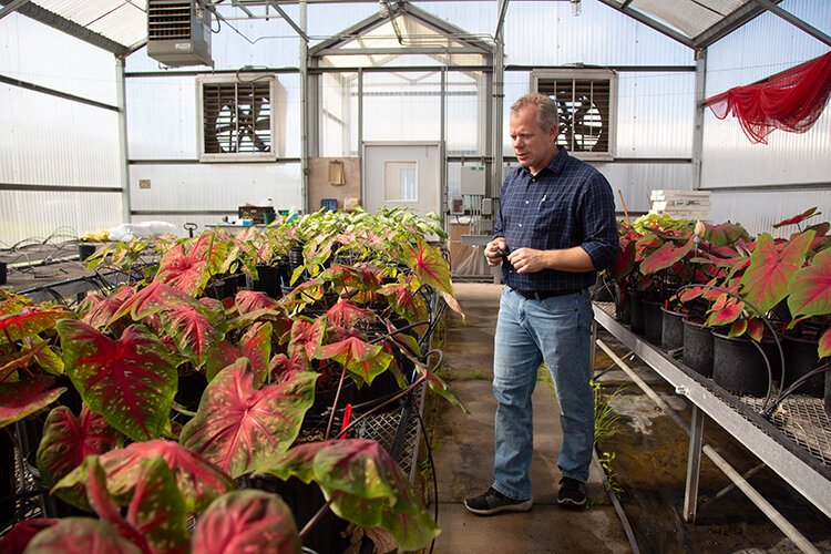 Nathan Boyd conducts caladium experiments to benefit Florida growers as 95% of the plants are produced in Lake Placid.