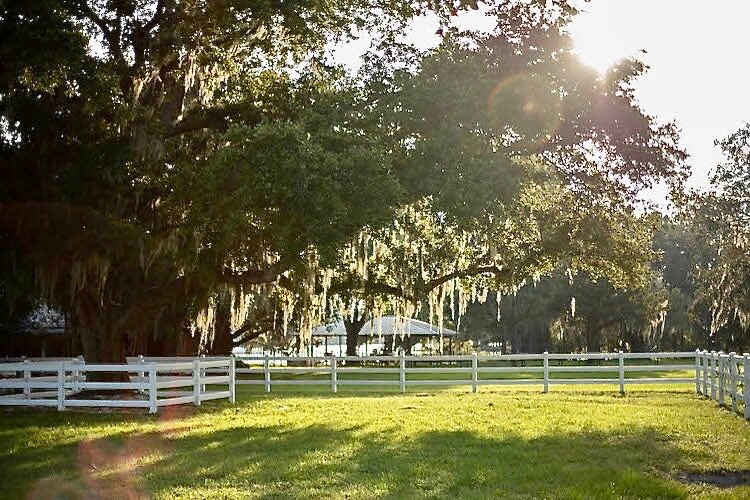 The sun peeks through the trees, highlighting a favorite grazing spot.