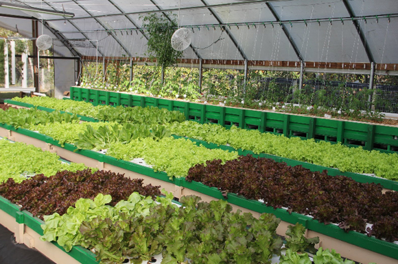 aquaponics sustainable fish farming thrives in florida