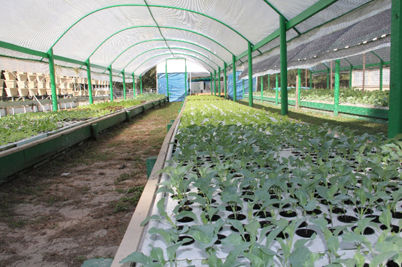 Aquaponics sustainable fish farming thrives in florida sciox Images