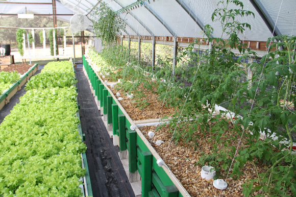Aquaponics sustainable fish farming thrives in florida for Florida tropical fish farms