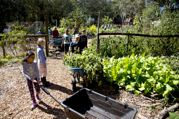 Beth Calcaterra's class works and learns in the school's produce garden.