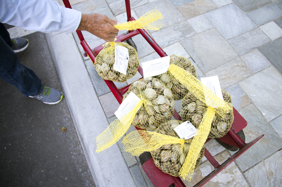 Aaron Welch II delivers Two Docks clams to Locale Market in St Pete.
