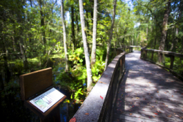 Information stands dot the pathway at Brooker Creek Preserve.