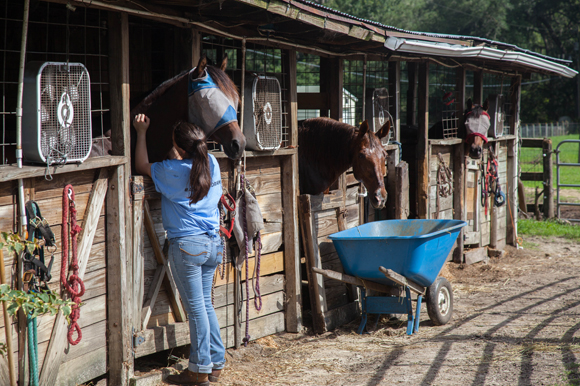 Bridget Bosch, VP at Grune Heidi, tends to the rescued horses.