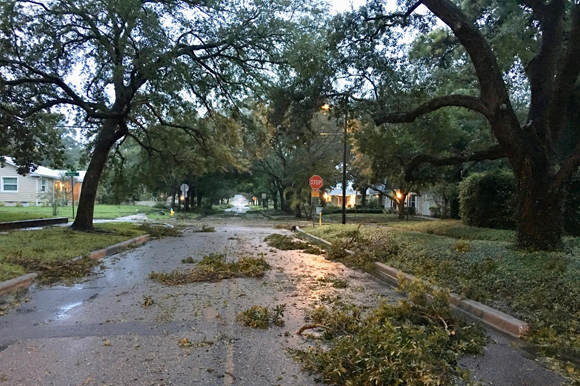 Street littered with branches and leaves in the aftermath of Hurricane Irma in Tampa in 2017.