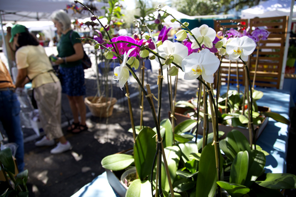 Thai Orchids & Leis at the Saturday Morning Market in St Pete.