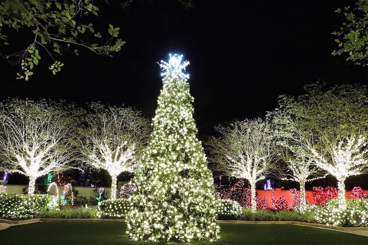 The 18-foot tree in the Wedding Garden at The Florida Botanical Gardens in Largo.