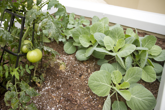 Veggies grow in planters near the pool at the Ella. - Julie Branaman