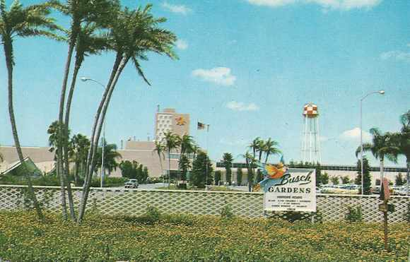 bush gardens tampa florida moroccan palace theater busch gardens in 1959 book excerpt images of modern america tampa bay by