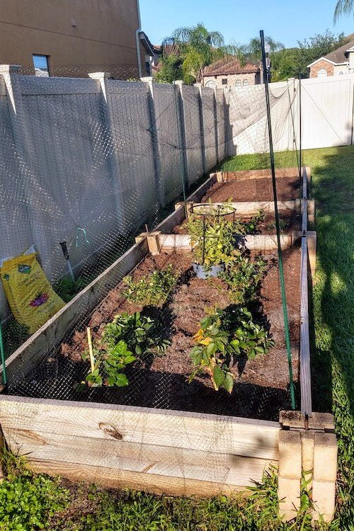 Amber Garcia Hand's raised beds for veggies, fruits, and herbs.
