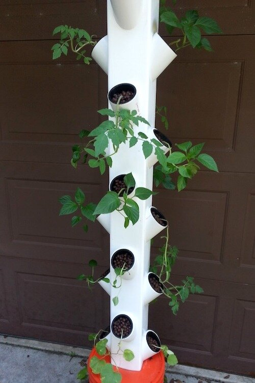 Vertical gardening is especially valuable where space is limited.