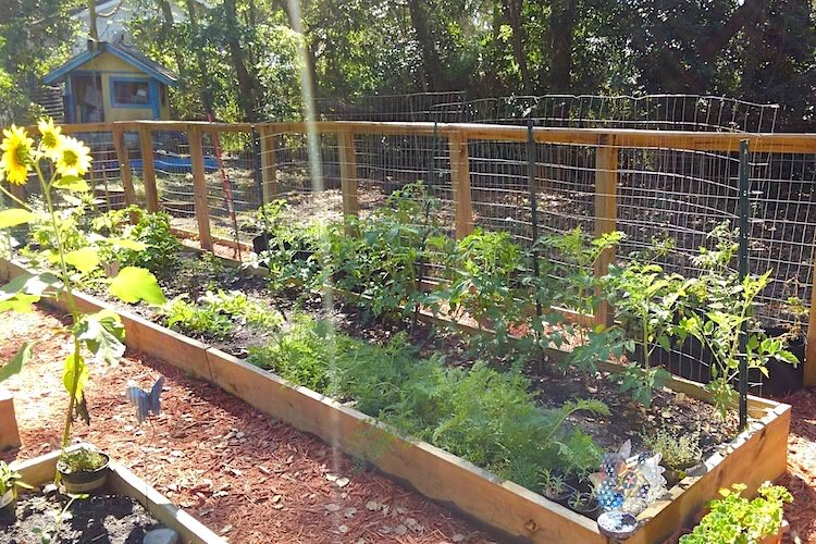 Kate Walkling grows her own food and shares with neighbors when she has extra.