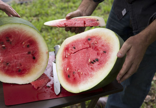 Florida Favorite watermelon