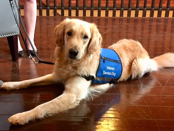 Bolt of Southeastern Guide Dogs