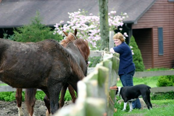 Nealia McCracken, founder of Saddlebred Rescue in New Jersey, looks over a new crop of rescues quarantined at the facility.