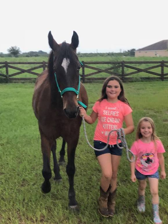 Erika Gilbert purchased Wintercreek Sugar and Spice, a daughter of William Shatner's famous stallion Sultan's Great Day, directly from a Pennsylvania Amish family that did not want to send her to slaughter when her buggy days were over.