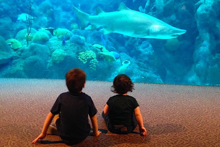 Kids visiting the shark tank at the Florida Aquarium in Tampa.