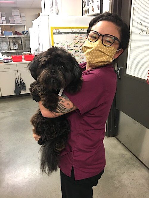 One of HSTB's wellness veterinary technicians brings a dog to an exam for a check up.