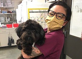 A wellness veterinary technician brings a dog to an exam for a check up.