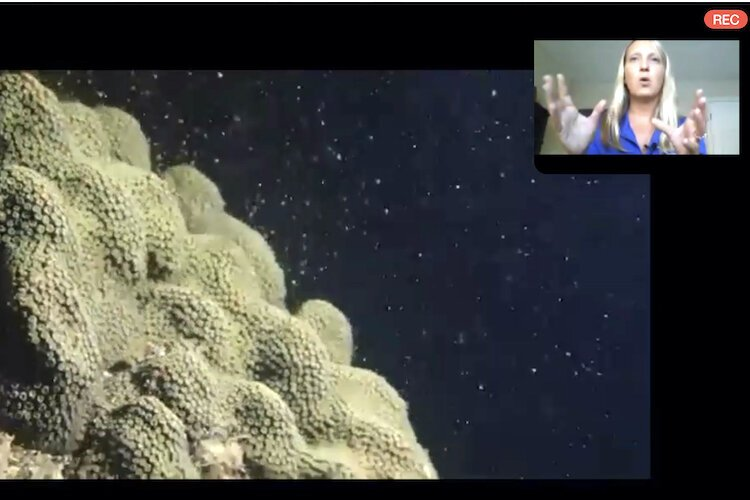 A coral reef spawns with the nurturing of scientists from Mote Marine in Sarasota.