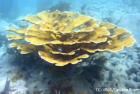 Example of coral in Florida Keys.